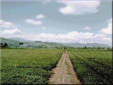 مکان های دیدنی طبیعی استان گیلان