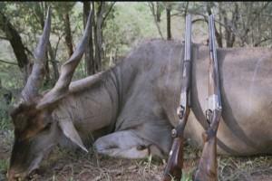 مستندهای شکار حیوانات